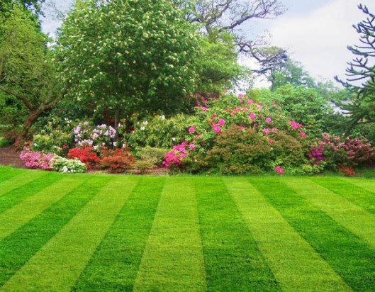 A Lawn After A Lawn Mower Has Been To Work